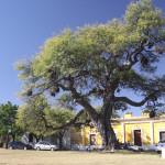 PAISAJE. El bus turístico facilitará el acceso a las bellezas de Jesús María, Caroya y Sinsacate.