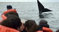 EMBARCADOS. El avistaje de ballenas se puede realizar en gomones o catamaranes con tripulación y guía. Hay salidas regulares.
