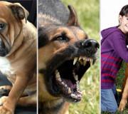 INVESTIGACIÓN. Demuestra que los perros poseen capacidades cognitivas que les permiten utilizar claves comunicacionales con personas.