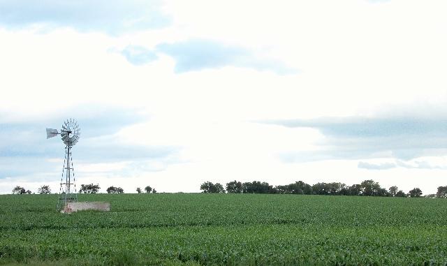 PRÓXIMA COSECHA. La actual siembra de oleaginosa llegará a su fin en mayo, cuando el valor internacional del producto será de 365 dólares la tonelada.