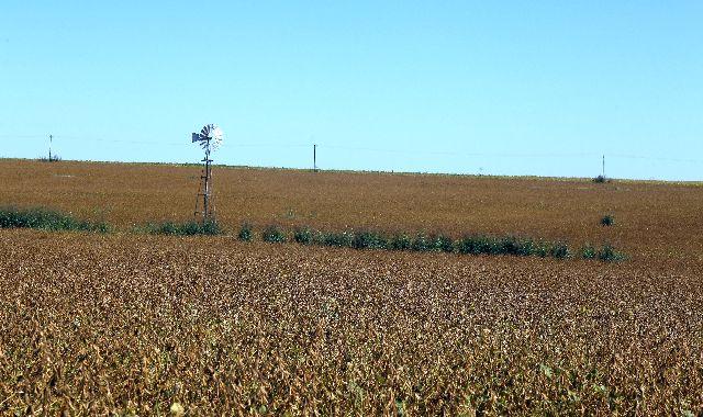 PRECIOS INTERNACIONALES. El contrato a futuro de  la oleaginosa aumentó e impactó en las negociaciones por locaciones de campos para siembra.