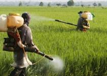 La empresa agropecuaria proveyó un plaguicida contaminado, que dañó la cosecha de soja