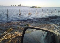 INUNDADOS. Muchos campos del sur de la provincia de Córdoba se encuentran bajo el agua.