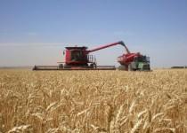 COSECHA. Los números finales de la campaña agrícola muestran un nuevo récord para la provincia.