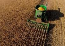 INDUSTRIALIZACIÓN. El proceso sobre el maíz es uno de los servicios más demandados.