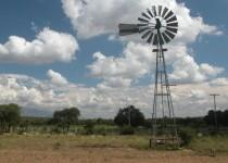 PÉRDIDAS. El impacto económico de la sequía se vería compensado en parte por la suba del precio.
