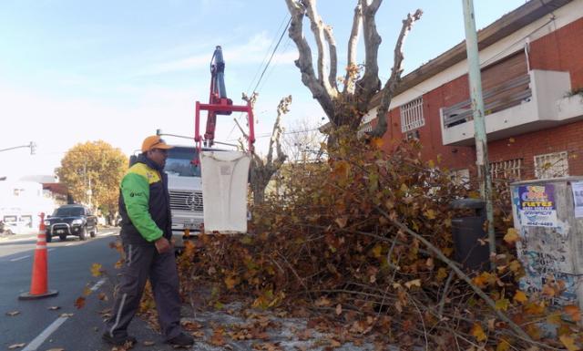 REUTLIZAR. Ramas y hojas de árboles podados son los principales desechos que pueden usarse.