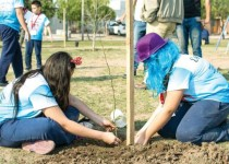 plantar arboles